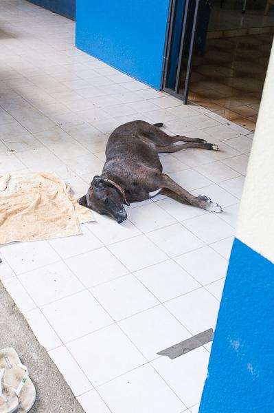 Hostel Beds on Bohio Costa Rica Manuela Doerr-19