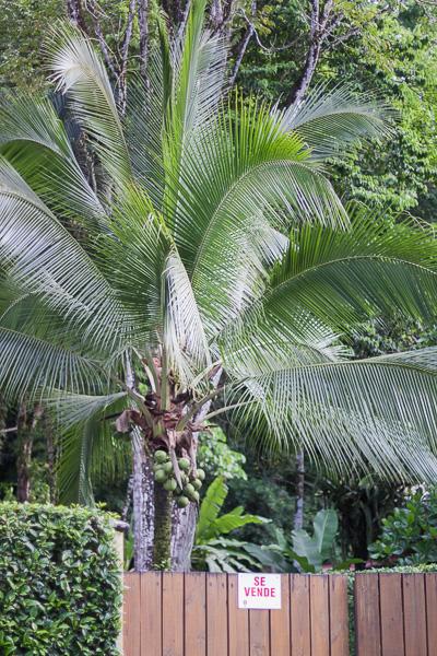 Puerto Viejo Costa Rica Manuela Doerr-5