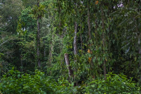 Puerto Viejo Costa Rica Manuela Doerr-7-2