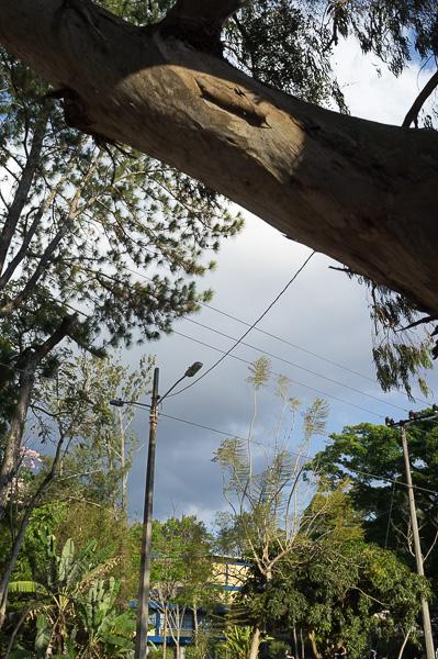 UCR Costa Rica Manuela Doerr-4