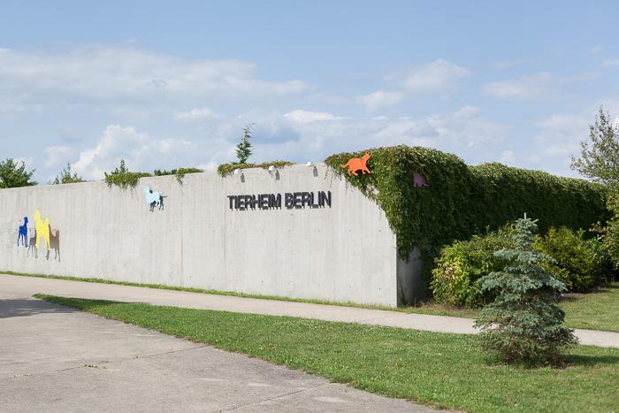 Tierheim Berlin ManuelaDoerr-1